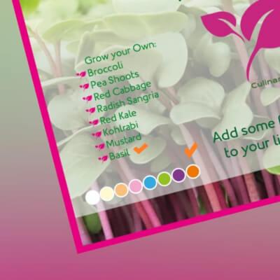 Basil Microgreen Kit