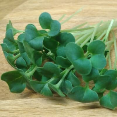 Broccoli Microgreen Kit