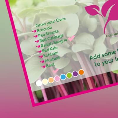 Radis Microgreen Kit