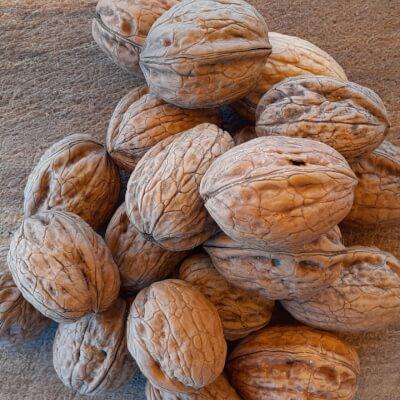Organic Walnuts In Their Shells