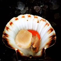 Scallops - Hand Dived