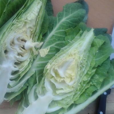 Organic Filderkraut Cabbage