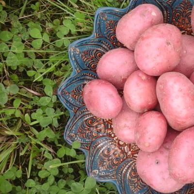 Organic Potatoes Setanta 1Kg
