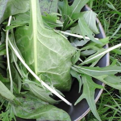 Organic Stir Fry Leaf Mix