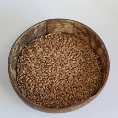 High Protein Wheat Grain 500G