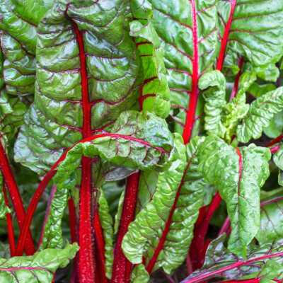 Ruby Swiss Chard