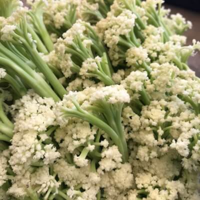 Sprouting Cauliflower