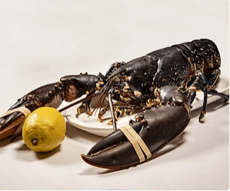 Lobsters Direct Ltd 1lb Live Lobster Neighbourfood