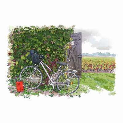 France's Less Travelled Wine Roads (Case, 12 Bottles)