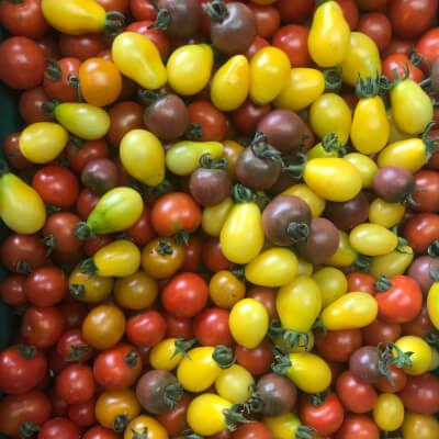 Organic Cherry Tomato Mix