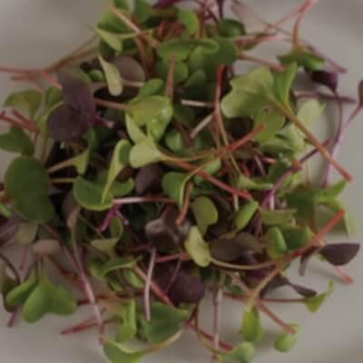 Organic Microgreen Mix