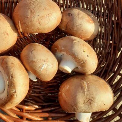 Organic Chestnut Mushrooms