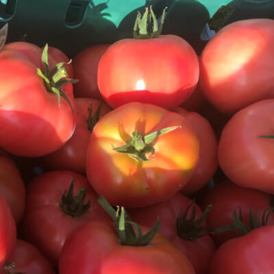 Organic Beef Tomato