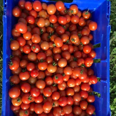 Organic Red Cherry Tomatoes