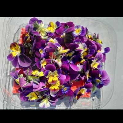 Organic Edible Flowers - Mixed