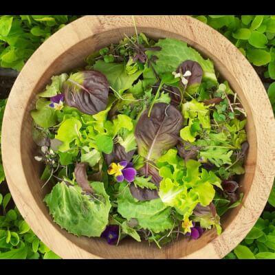 Organic Mixed Leaves