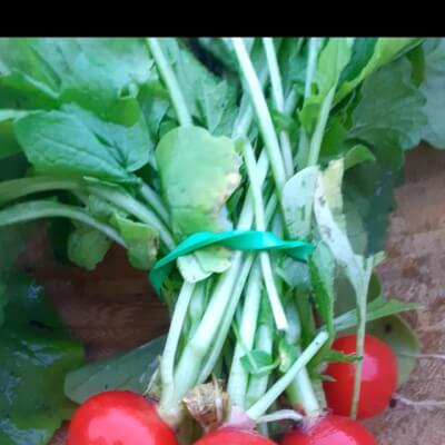 Organic Raddishes