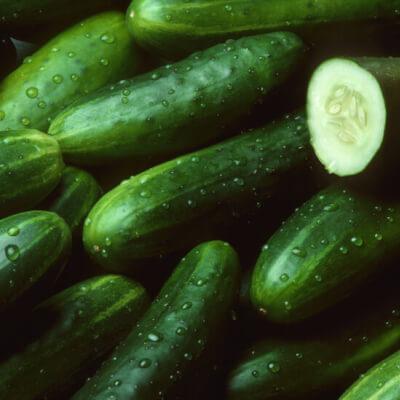 Cucumber, Certified Organic