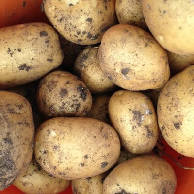 Potatoes (Marfona), Certified Organic
