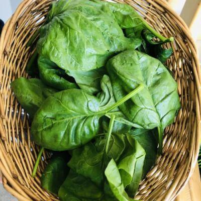 Irish Spinach