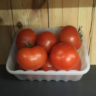 Wilton Tomato