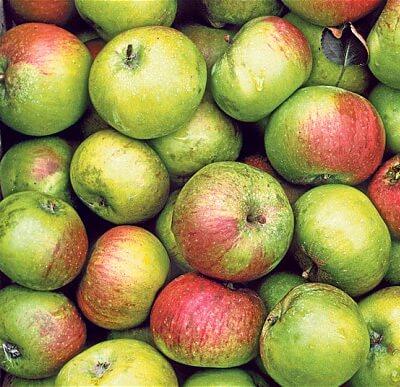 Veg Cooking Apples