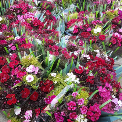 Sweet William Flowers (2 Bunches)