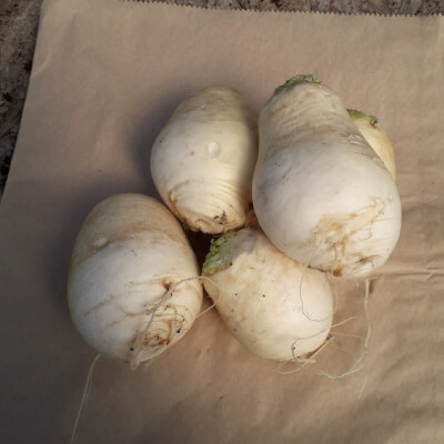 Turnip - Snowball.