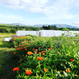 Poppa Dom's Farm