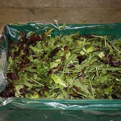 Salad Leaf 150G Italy