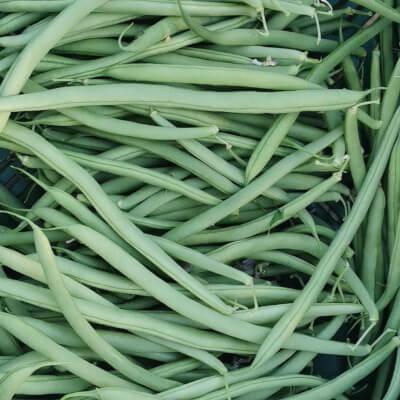 Organic Irish French Beans