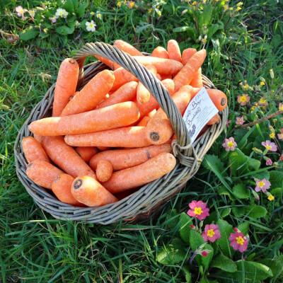 Organic Irish Carrots