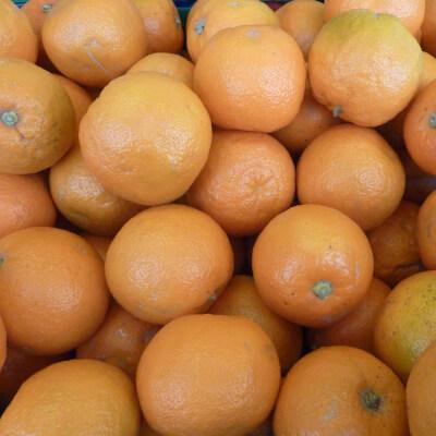 Organic Oranges - 1Kg