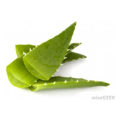 Aloe Vera Piece (Large)