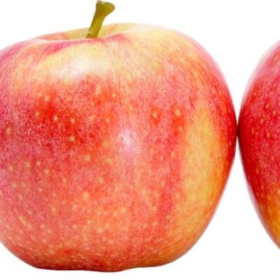 Organic Red  Apples (Netherlands)