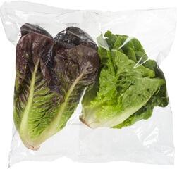 Organic Baby Gem Lettuce (Double Head)