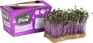 Organic Micro Herb Purple Cress