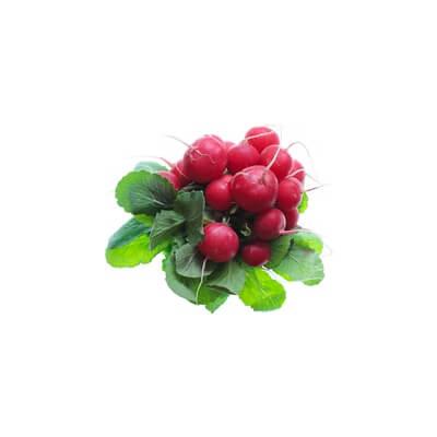 Organic Radish (Netherlands)