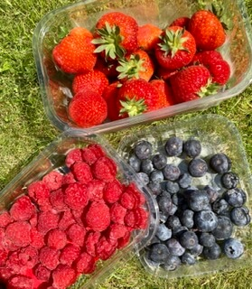 Scottish Berry Selection 3 Punnets