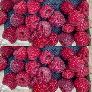 Scottish Raspberries X 2