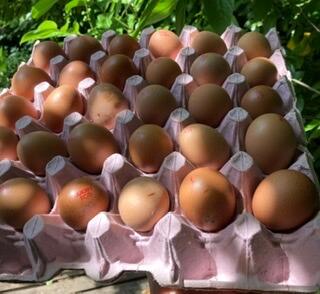 Tray Organic  Small Eggs