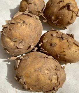 New Jersey Potatoes Organic 1Kg
