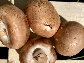 Mushrooms Chestnut Organic 400G
