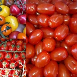 Tomato Medley Isle Of Wight Organic 500G