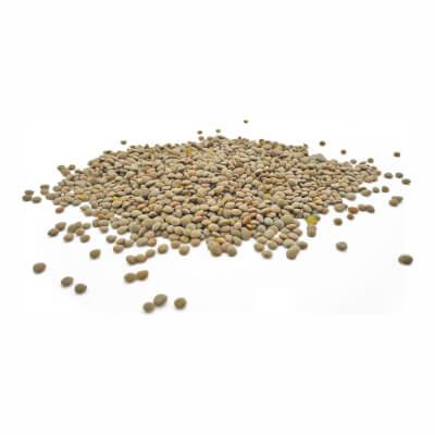 Hertfordshire Olive Green Lentils