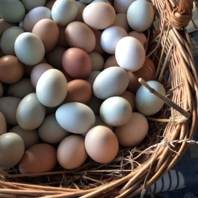 Free Range Coloured Hens Eggs