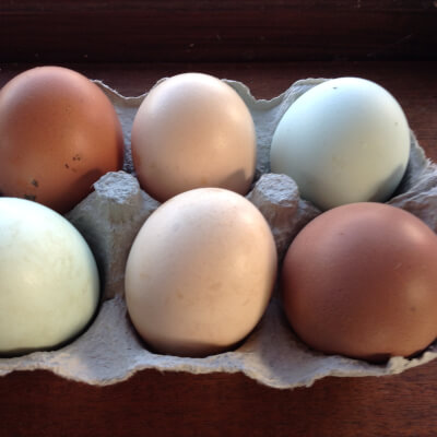 6 Free Range Chicken Eggs