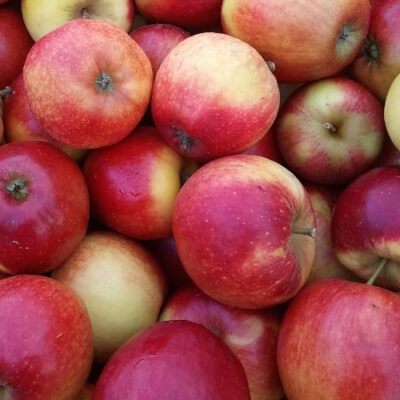 The Apple Farm Eating Apples