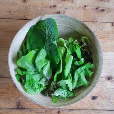 Organic Mixed Lettuce Leaf