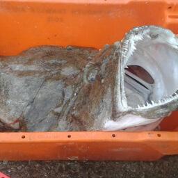 Monkfish Chunks 300 G